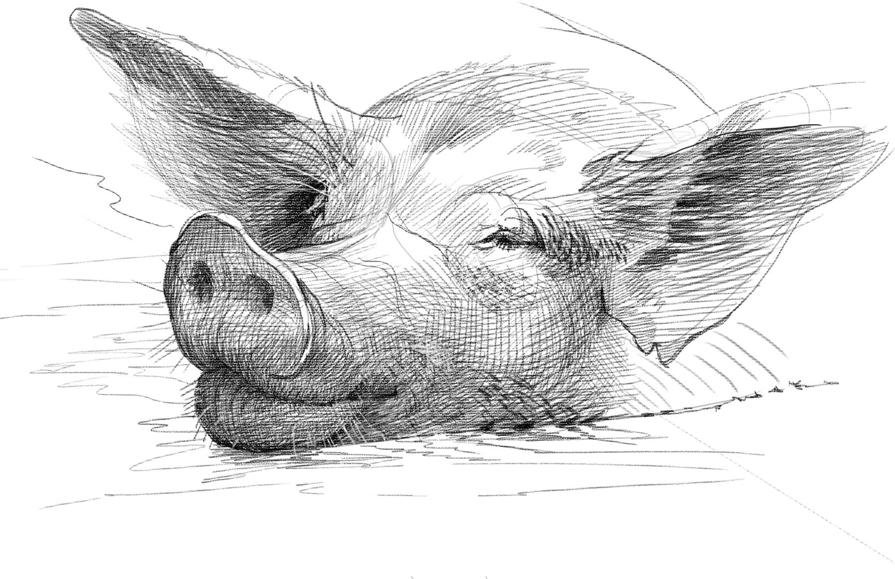 Pig digital drawing downloadable or mailed